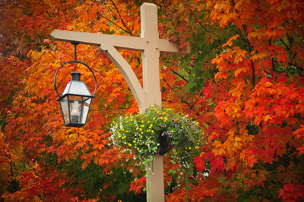 Only in Maine do you see color this brilliant and everywhere!